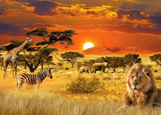 Afrika ist ein Kontinent voller Vielfältigkeit